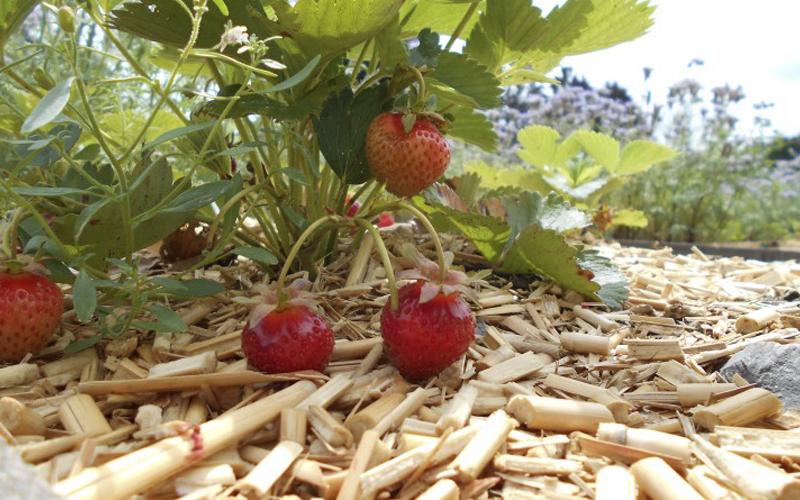 De tuin van klein fruit